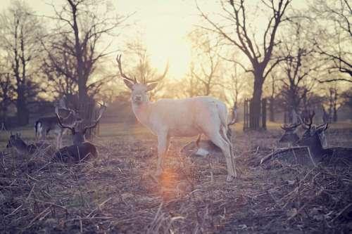 free images  deer