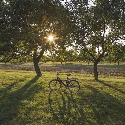 Bike in a field at sunset