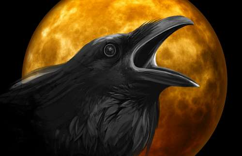 free images  Raven