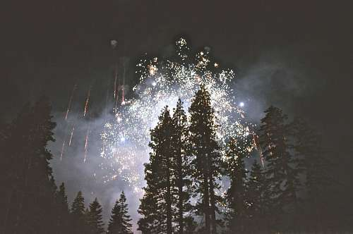 Fireworks at forest