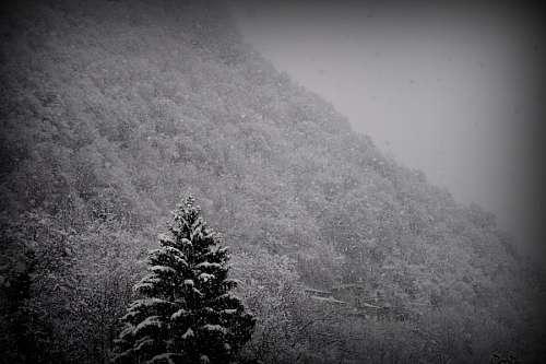 free images  black, mountain, snow, winter, pine, landscape, ni