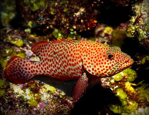 free images  Tropical Fish