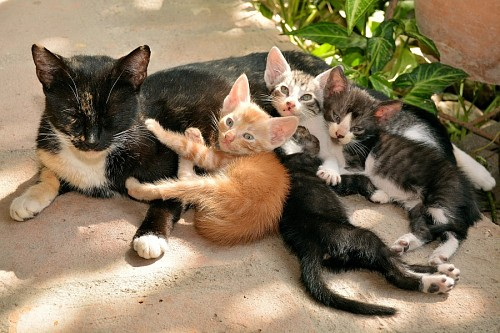 Mother cat with her little pups