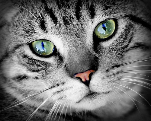 free images   Deep green feline look for wallpaper