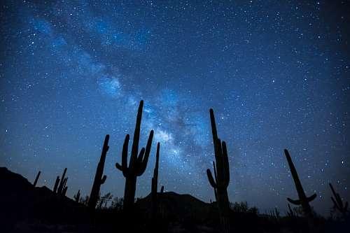 Cactus at night
