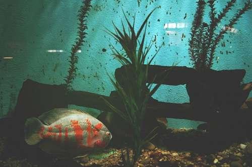 free images  aquarium