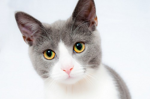 free images  Close-up of sweet kitten on white background