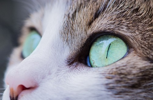 free images   Loving green feline look