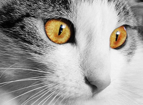 free images  Beautiful look yellow eyes