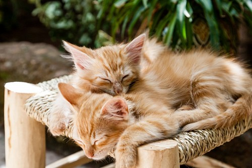 free images  Little kittens getting warm