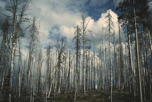 free images  Forest Landscape