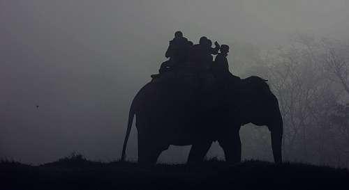 free images  Elephant