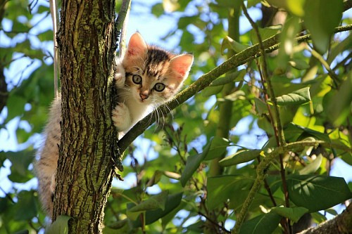 Naughty kitten climbing tree