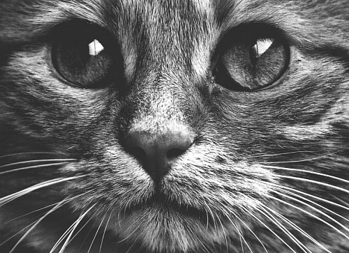 Beautiful feline looking black and white portrait