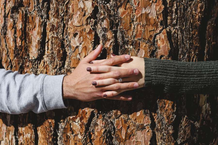 love, couple, hands, tree, nature, exterior, concept, union, strength, natural, day, bark, trunk,