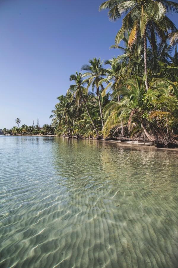 Panama, beach, tropical, nobody, palm, transparent, Caribbean, Caribbean, idyllic, vacation,