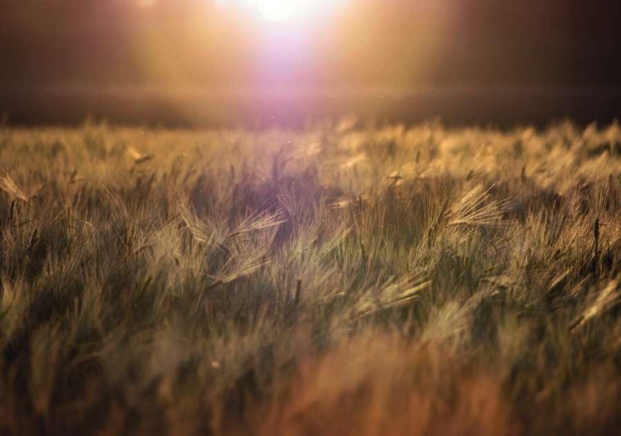 grass, grass, sunset, background, background, nobody, light, glow, flash, sun, nature,