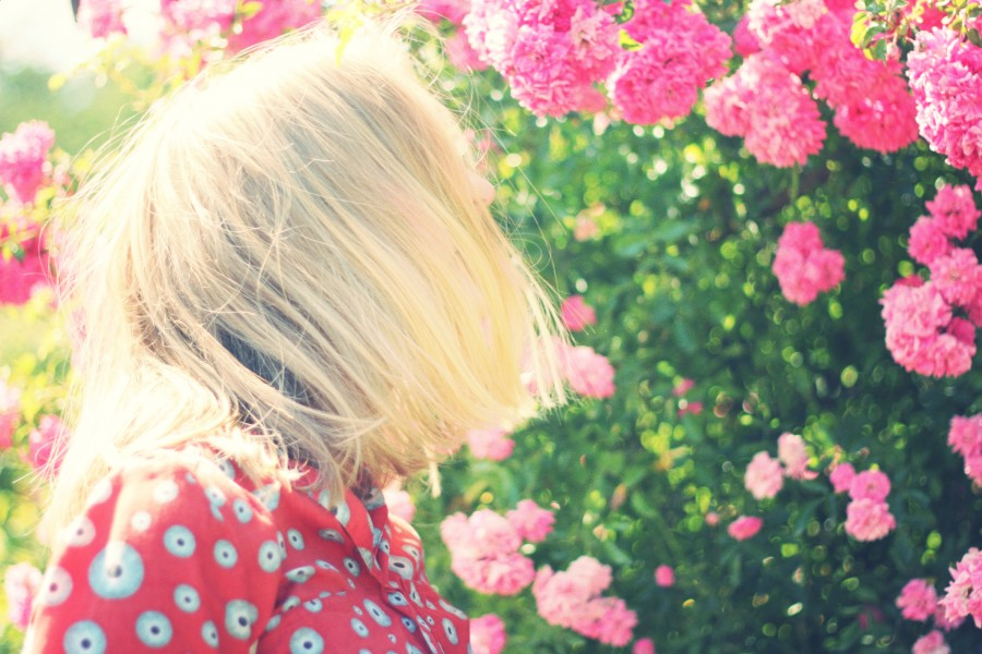 one person, people, woman, blond, blond, sunset, young, teen, landscape, sunset, sunset, gold, beauty, nature, relaxation, serenity, hair, tranquility, travel, travel, vacation, flowers, pink, flowery spring