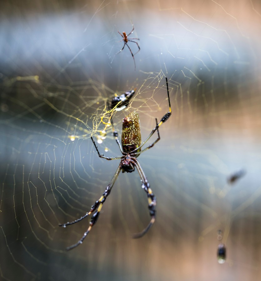 free images  Spider