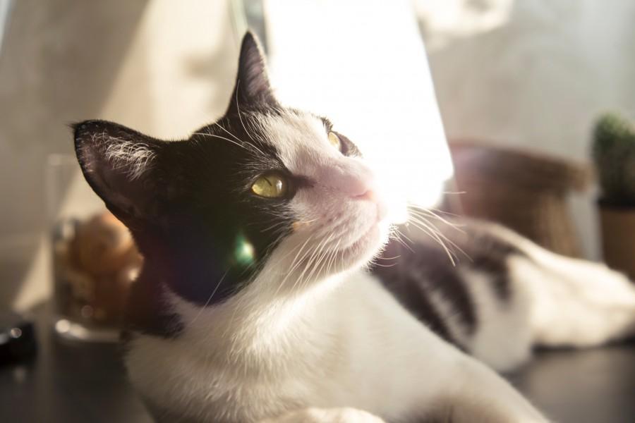 free images  Cat