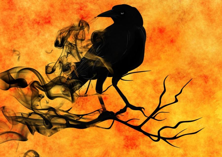 crow, illustration, halloween, terror, fear,