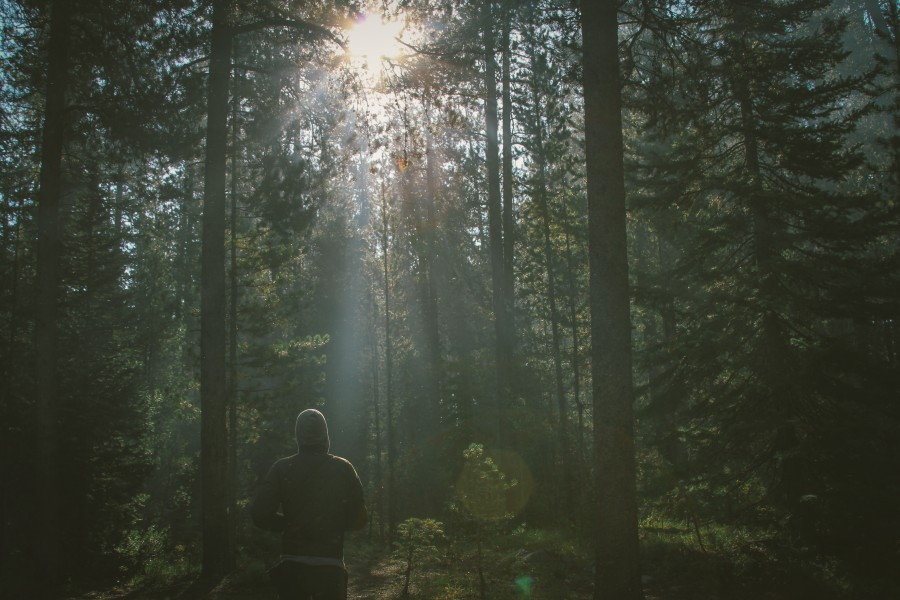 one person, people, man, concept, freedom, forest, adult, nature, freedom, outdoors,