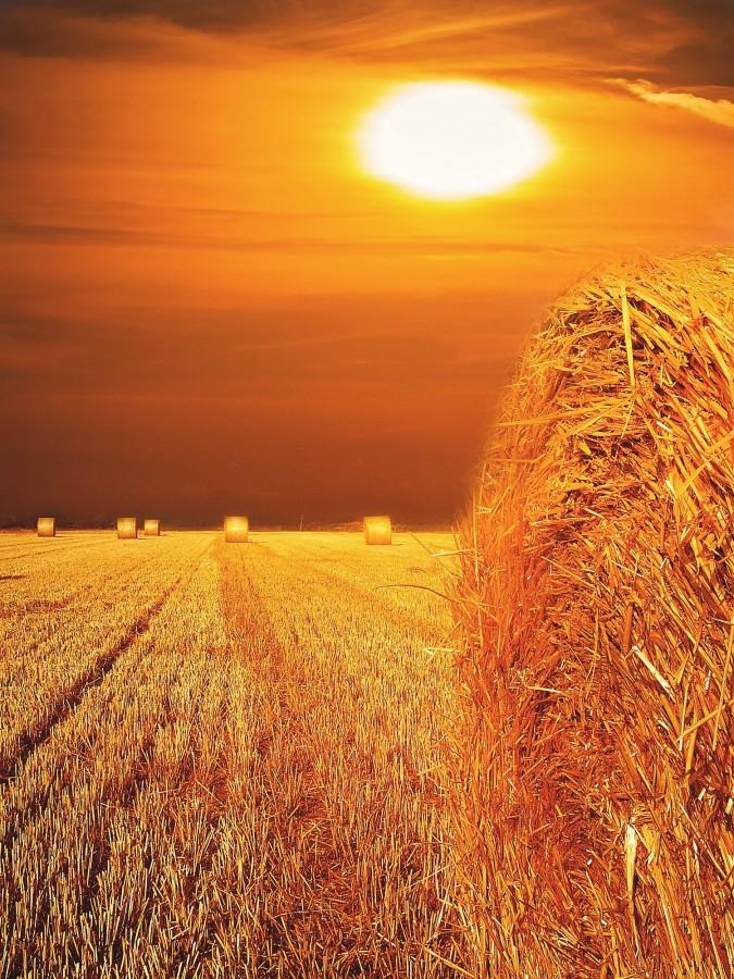field, sunset, bale, grass, dry, landscape, nobody, straw, gold,
