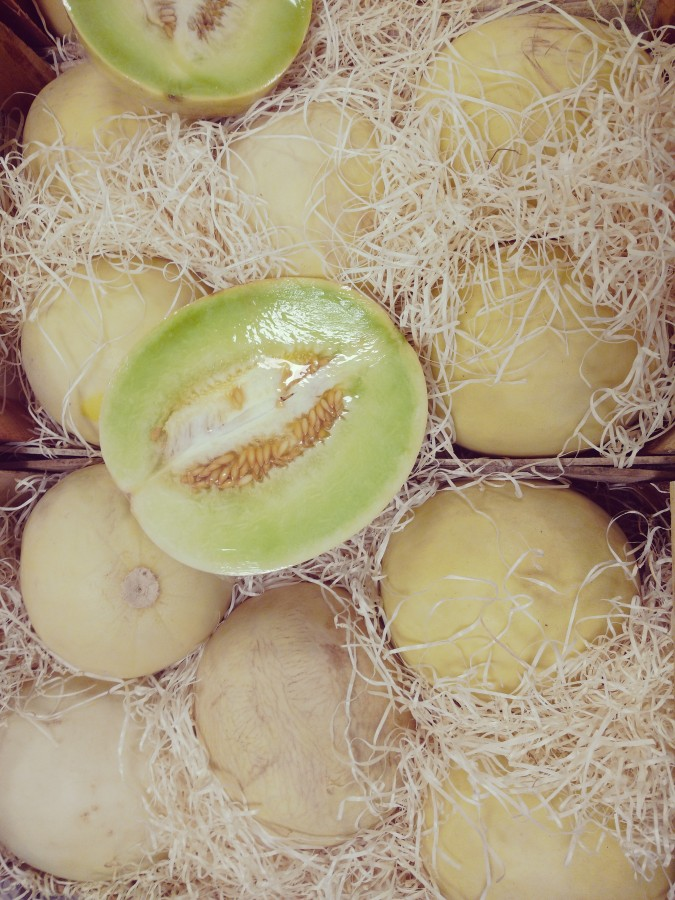 melon, melons, fruit, food, healthy food, nutrients, sweet, edible pulp, oval