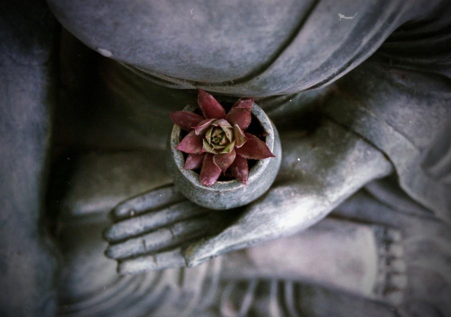 lotus flower, statue, buddha, concept, religion, meditate, meditation, balance,