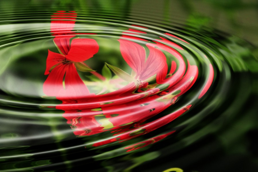 geranium, wave, water, rings, circle, circles, waves, wallpaper, background image, background, relaxation, surface wave motion, free photos, free pictures, wallpaper hd, red