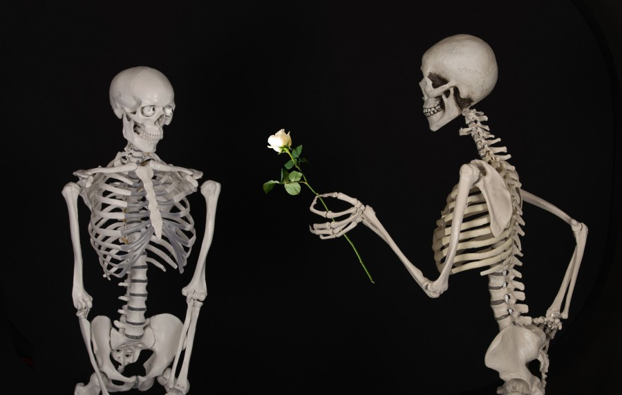 Skeleton, flower, congratulations, friendship, love, bones, skeleton, black background, white rose, concept