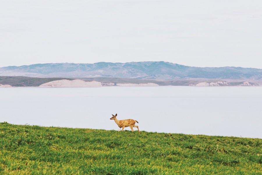 animal, animals, deer, bambi, one, nature, wild,