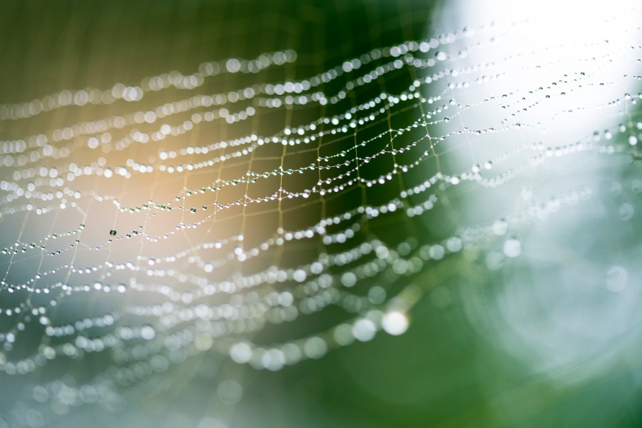 free images  Spider Web