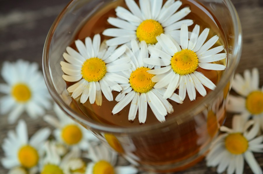 Chamomile, Tea, remedy, natural, hot, drink, flower, medicine,