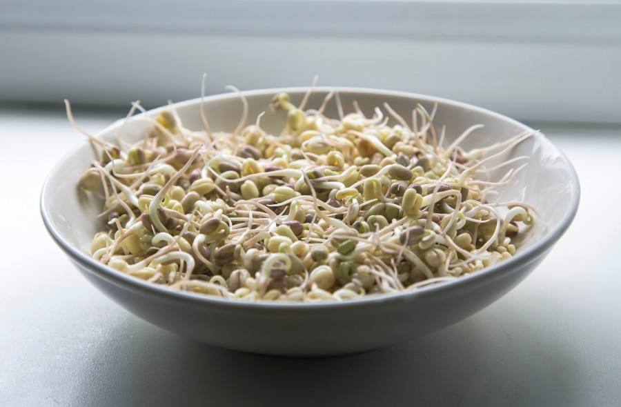 bean sprouts, food, sprouts, healthy, vegan, food, dish, food,