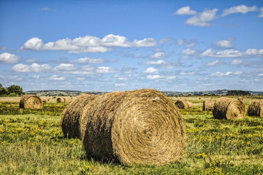 Bale, field, garzon, Uruguay, bulge, bullet, cabuya, tamale, calar, strap, drop, paca, sky, landscape, country, pasture