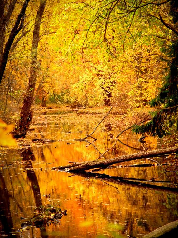 Rio, sunset, autumn, color, colors, woods, yellow, landscape,