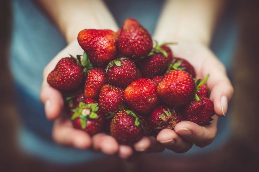 strawberries, hand, woman, offer, offering, fruit, red, growing, harvesting, concept, give, natural, bunch, much, 4k wallpaper