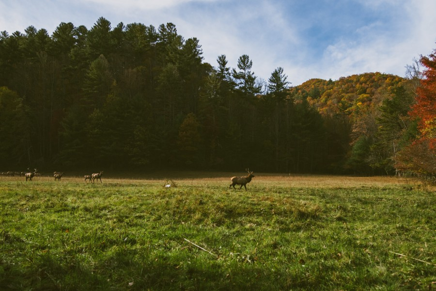free images  Deers at forest