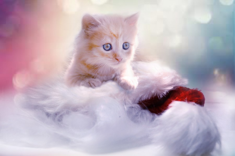 Image Of Tiny Kitty For Wallpaper 4k Free Photo 100010497