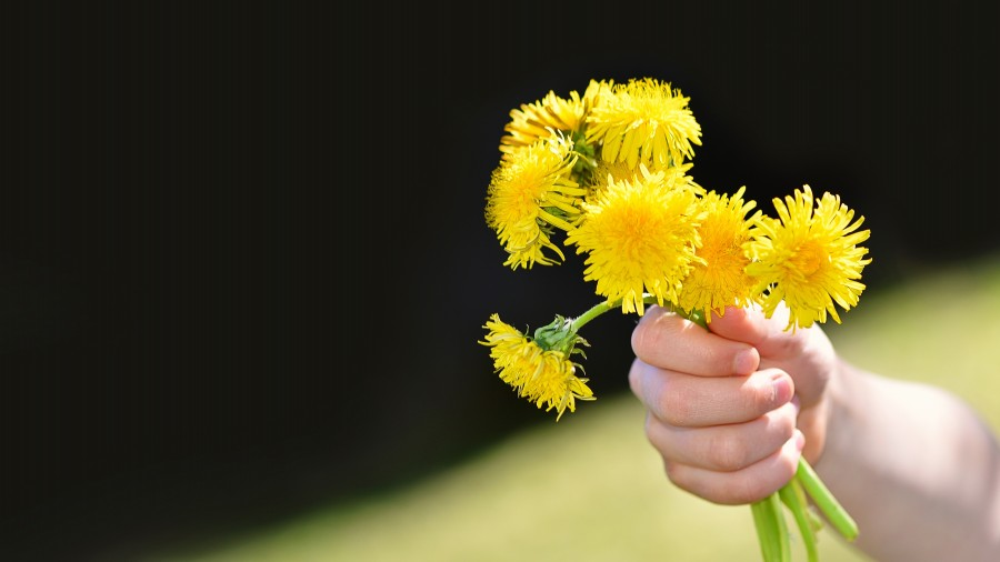 bouquet of flowers, bouquet, yellow, daisy, man, hand, gift,