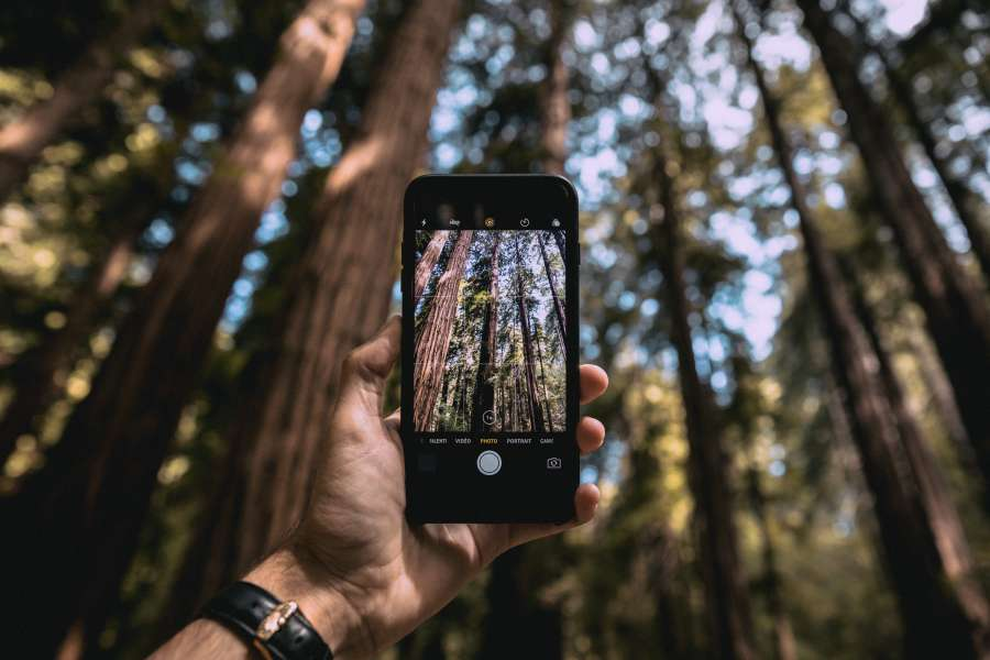 photo, smartphone, phone, photo, take, vacation, forest, exterior, day, man, adventure, tree, trees, travel, nature, landscape, beauty,