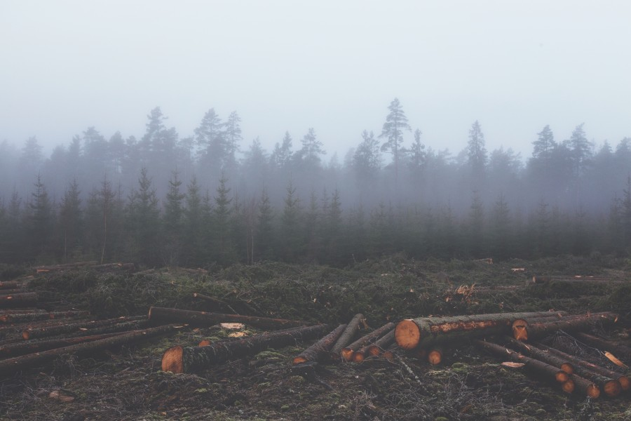 Deforestation, timber, environment, logging, cutting, tree, trees, cut, cut, industry, forest, pine, pines,