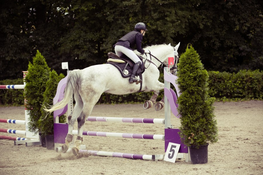 Riding, one person, people, horse, jumping, vaulting, sport, rider, white, woman, fence, obstacle,