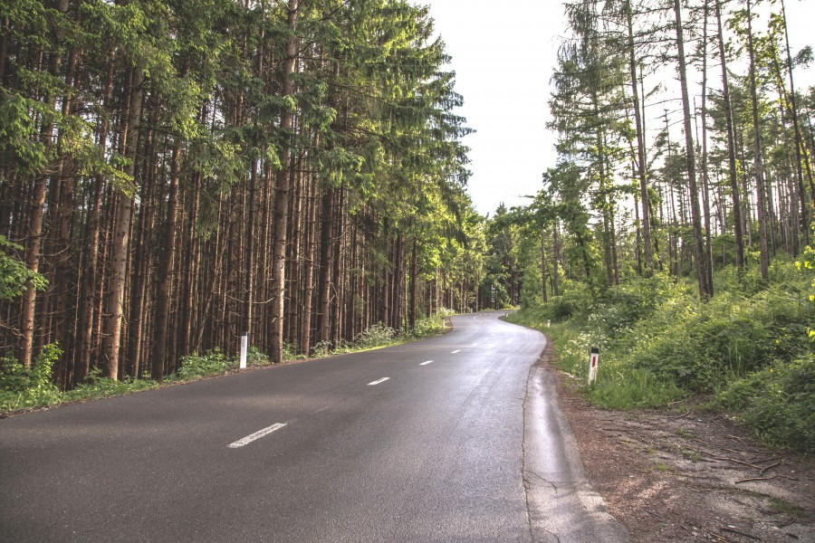 free images  Road in the forest
