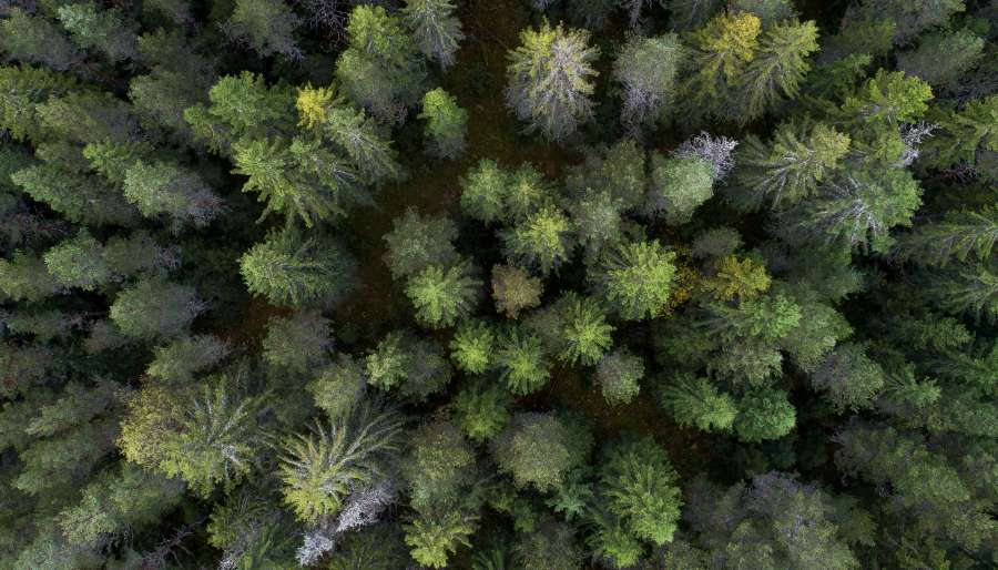 🥇 Image of Pine forest view from above - 【FREE PHOTO ...