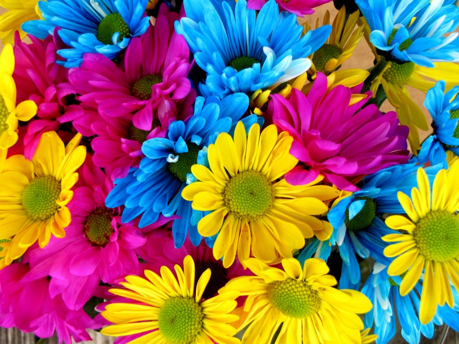 daisy, daisies, colorful, color, background, background, flowers, flower, colors, yellow,