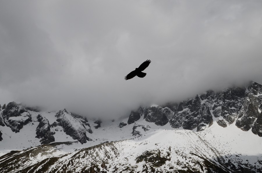 black and white, sky, cloud, cloudy, winter, hawk, bird, flying, flying, mountain, mountains, landscape, snow, snow covered,