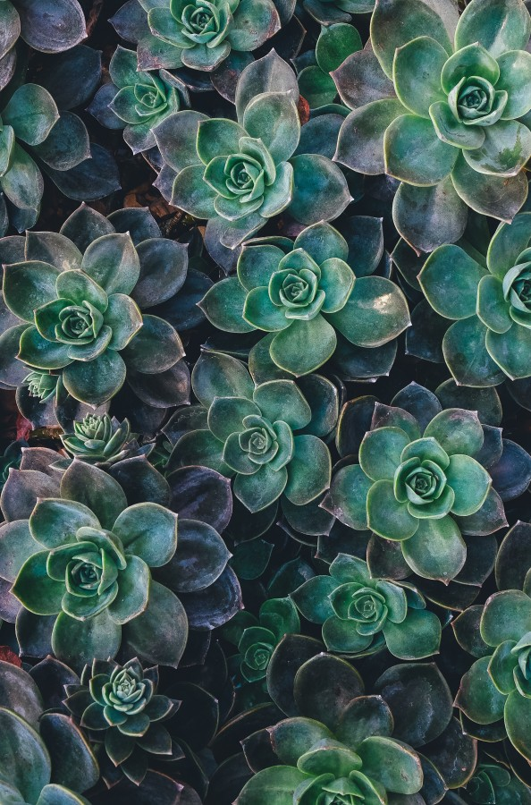 Flowers, nature, petals, plants, beauty, colorful, spring, green, garden, succulent