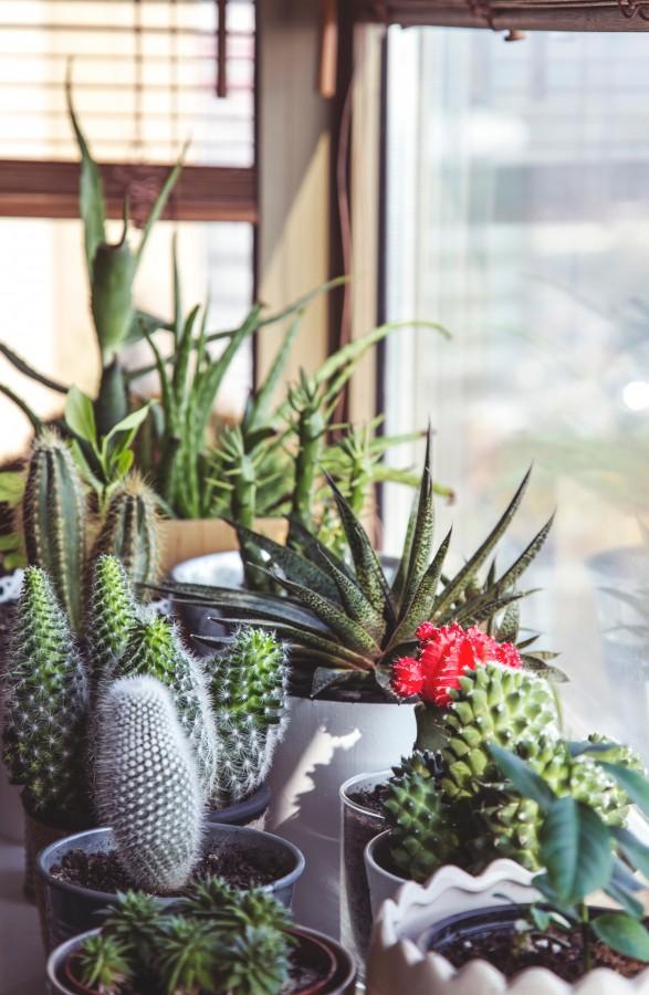 free images  Cactus garden